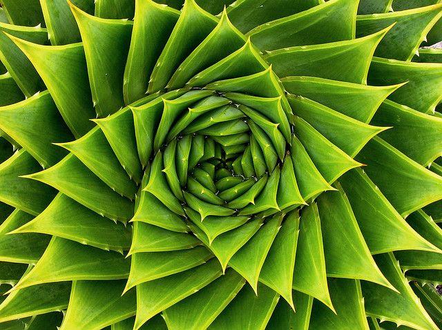 La nature est la source de la connaissance