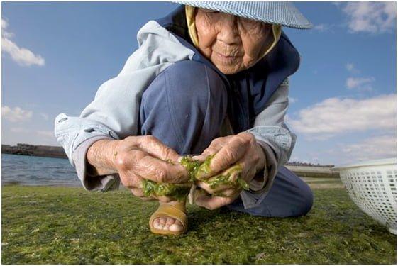 l'ile des centenaires en bonne santé