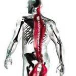 La chaîne musculaire postérieure