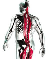 La chaine musculaire postérieure